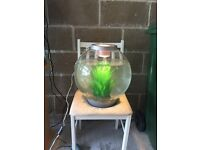 30l bi orb fish tank full set up with pump filter light gravel ornament a work and all in pic