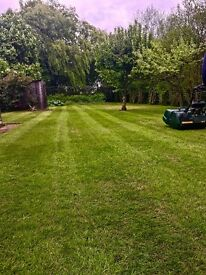 Grass , hedge cutting and ground maintenance services