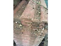 FREE approx 70 roofing tiles