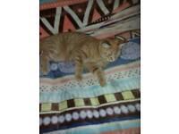 5 month kittens