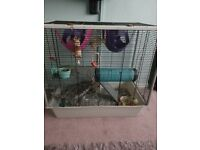 Two rats and cage free to good home