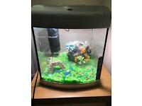 Fish tank complete with all accessories