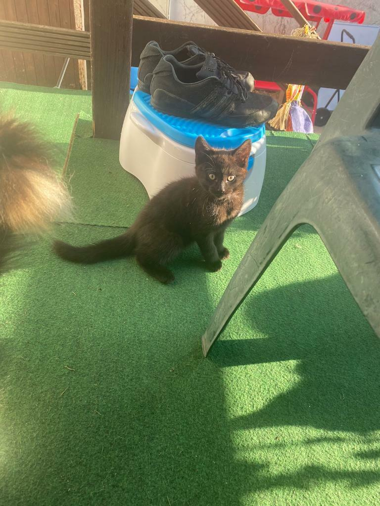 Cats For Sale In Poole Dorset Gumtree