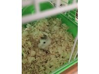 Adorable hamster with everything