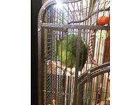 Amazonian Parrot + Cage + Food cheapest on here
