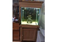 Excellent condition fish tank/cabinet with accessories.
