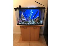 Fish tank, Stand and everything with it