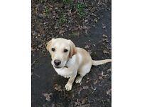 Pet sitter. Dog Walker. puppy socialising services