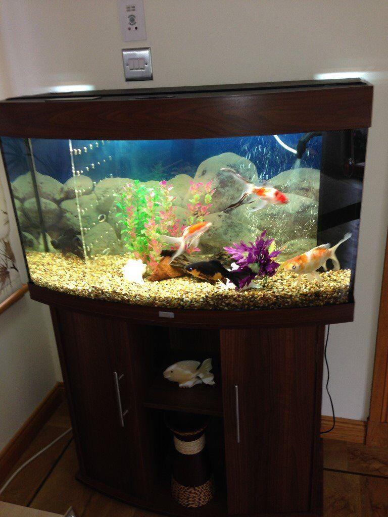 juwel vision 180 aquarium and cabinet in montrose angus gumtree. Black Bedroom Furniture Sets. Home Design Ideas