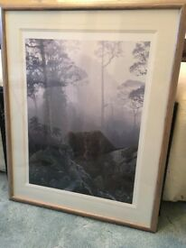 Framed Picture Black Panther (Jaguar) in Forest – Collect Only