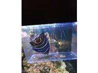 Koran marine fish