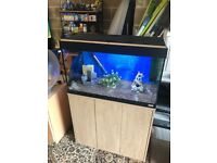 125l fluval Roma fish tank full set up with stand light filter heater gravel lid ornament all work