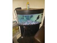190ltr corner fish tank