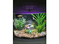 Aquazone. Aquaone 28 litre fishtank Complete set up