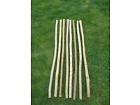 Walking Stick Shanks (Hazel, Ash, Elder) 3 for £10