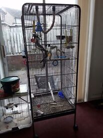 2 taim and talking cockateils with 5 foot cage and toys £150