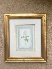 Sharon Bassin Pastel Pink Rose Print