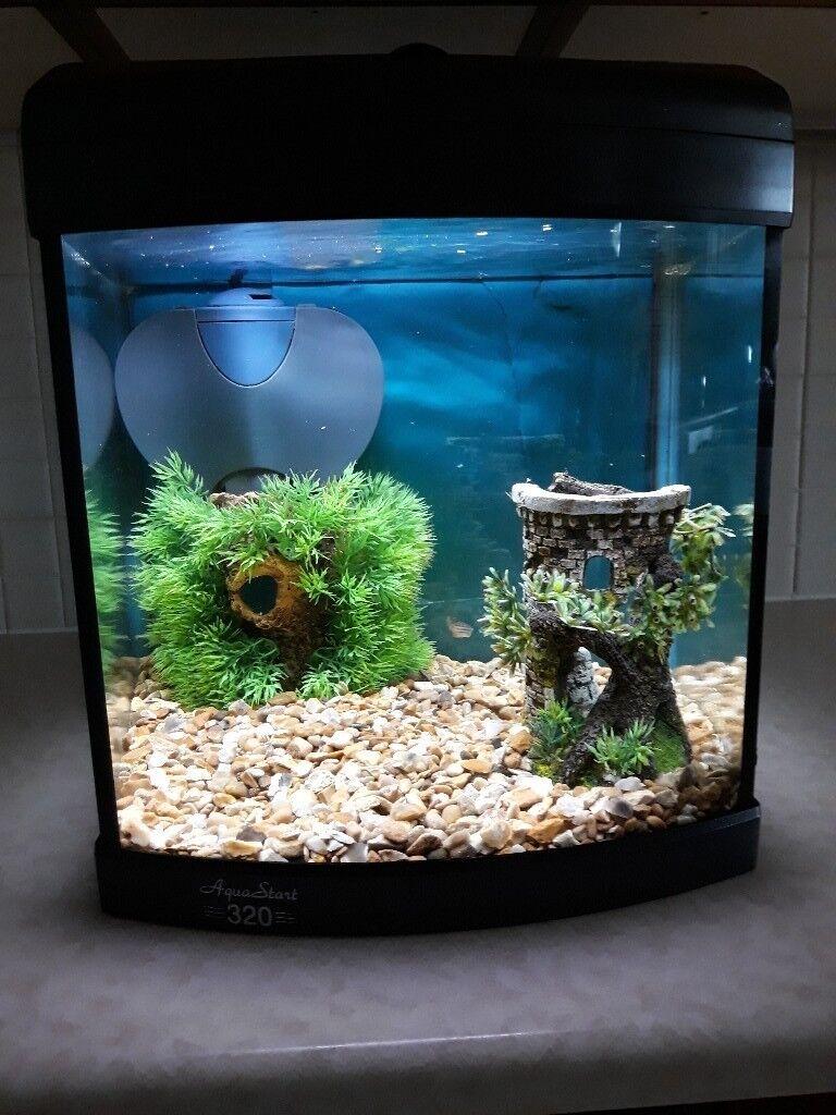 Fish & Fish Tank for sale | in Borrowstounness, Falkirk | Gumtree