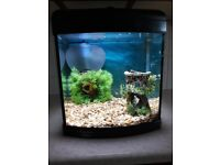 Fish & Fish Tank for sale