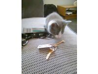 4 playful kittens for sale, 3 black and white 1 gray and white