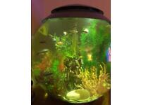 Bio orb fish tank with tropical fish