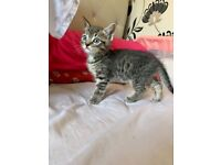 5 cute kittens looking for their forever homes