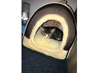 Injected, dewormed, de-flead Kitten to good Home.