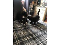 Beautiful black and white kittens, 1girl 1boy