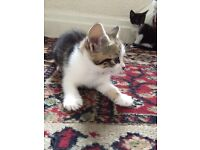 3 adorable kittens and mother for sale