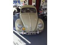 "1955 Oval Beetle stunning classic not splitscreen camper bay ££££ spent ""HURRICANE CARS"""