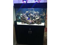 Aqua one 300 black marine/tropical fish tank aquarium with setup