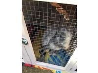 2 rabbits free to a good home
