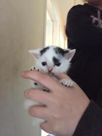 Kittens for rehoming.