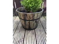Wooden Pots and Wall Planters