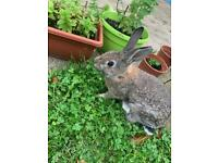 2 x 5 month old Rabbits