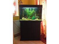 140 litre fish tank with stand