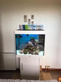 Juwel lido 200 fish tank