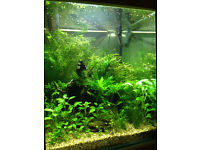 Tropical Fish Tank Custom Made 50cm x 50cm x 60cm All Equipment Included *REDUCED*