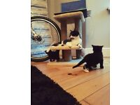 Three lovely kittens ready for new home