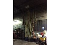 15FT OAK TREES FOR SALE
