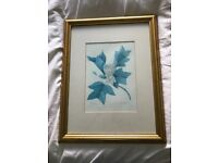 Two Botanical Prints in gilded frames