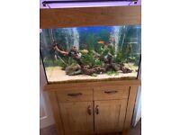 Aqua one oak style 145l aquarium & fish