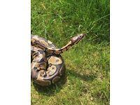 Python and vivarium