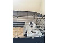 Male mini lop rabbit with cage and accessories