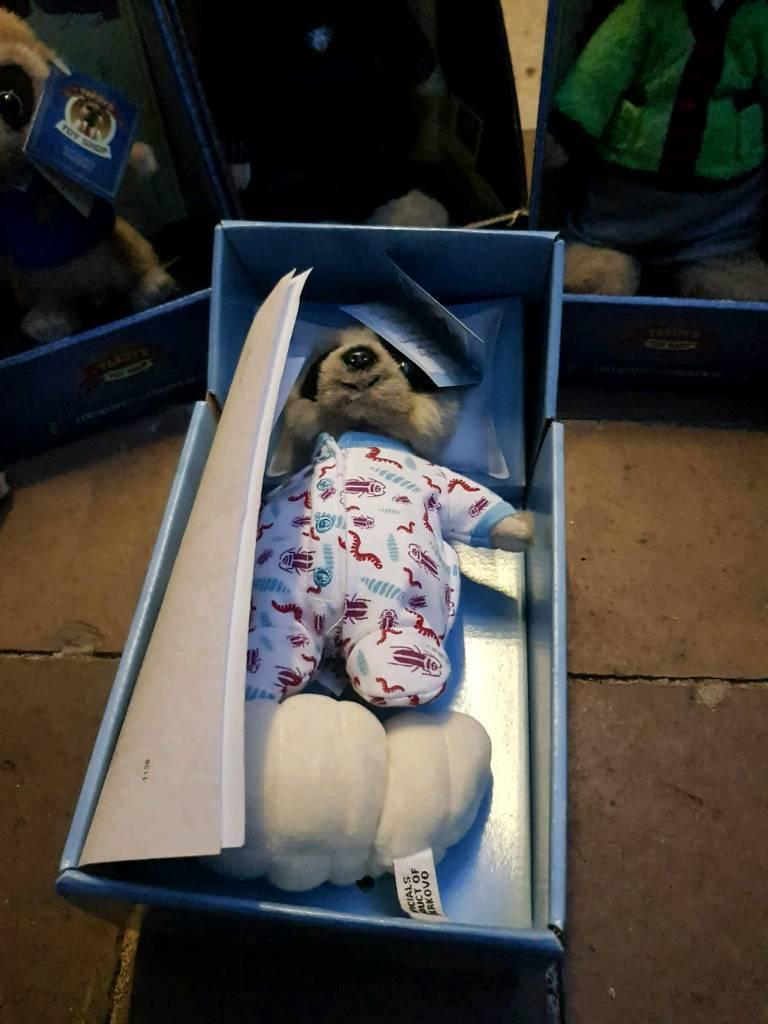 Compare the market meerkat toy. Baby oleg.