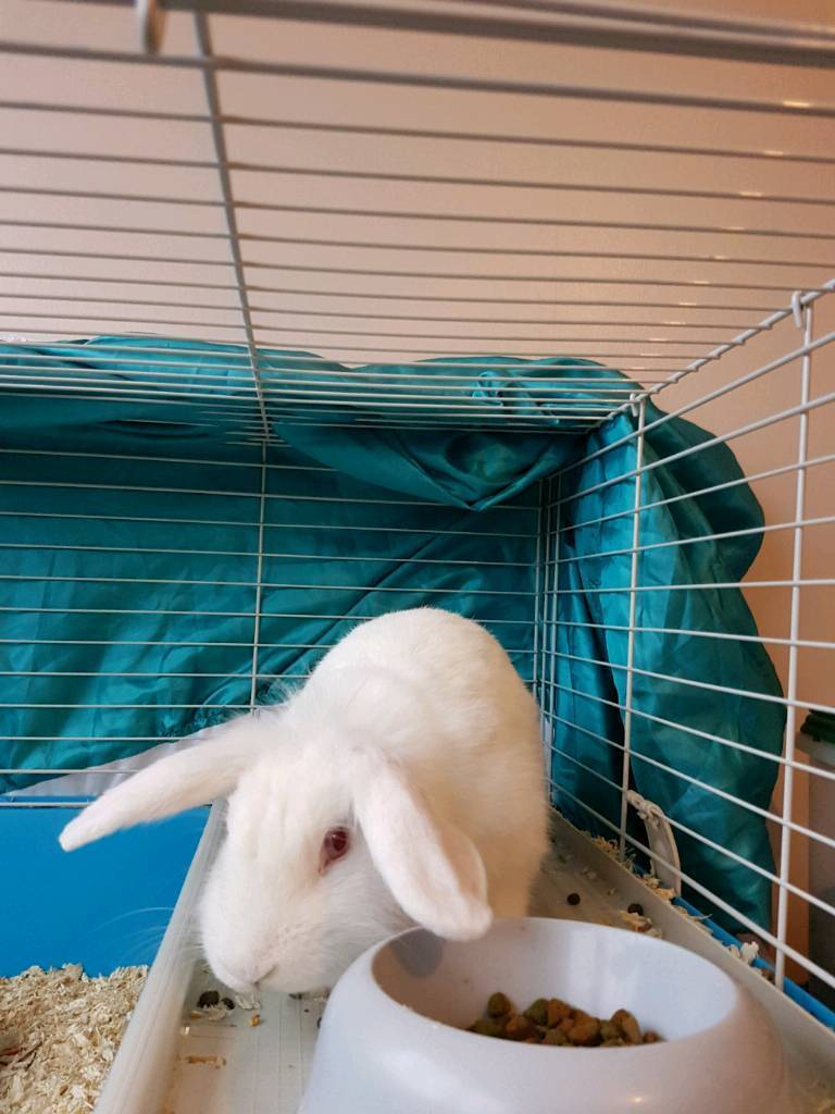 5 month old rabbit