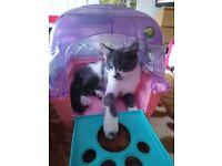 beautyfull kitten