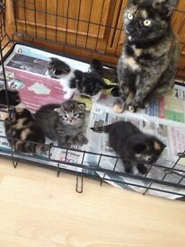 Four beautiful kittens to be rehomed