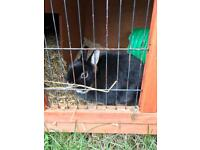 4 Rabbits for sale