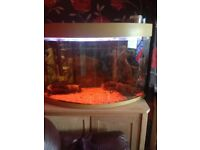 4foot bow fish tank and cabnet